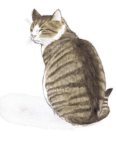 catback.JPG