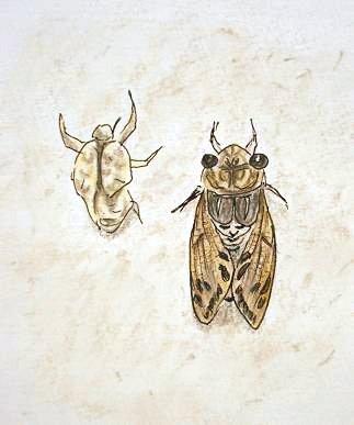 cicada2.jpg